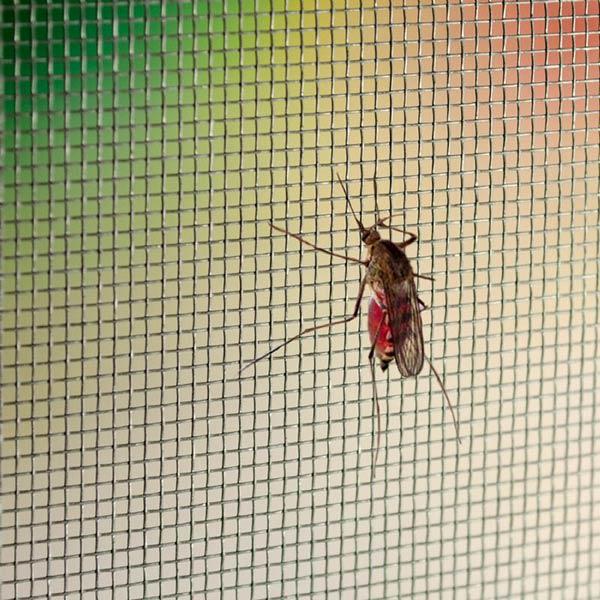 mreza proti komarjem fibra obnova 2